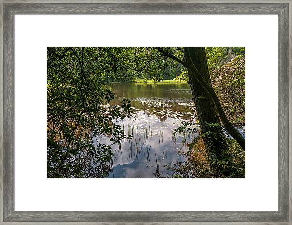 Pond In Spring Framed Print