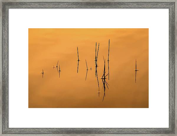 Pond Reeds In Reflected Sunrise Framed Print