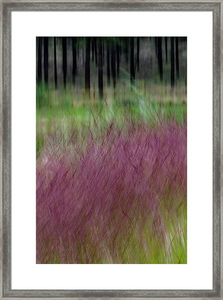Ponderosa With Grass Framed Print