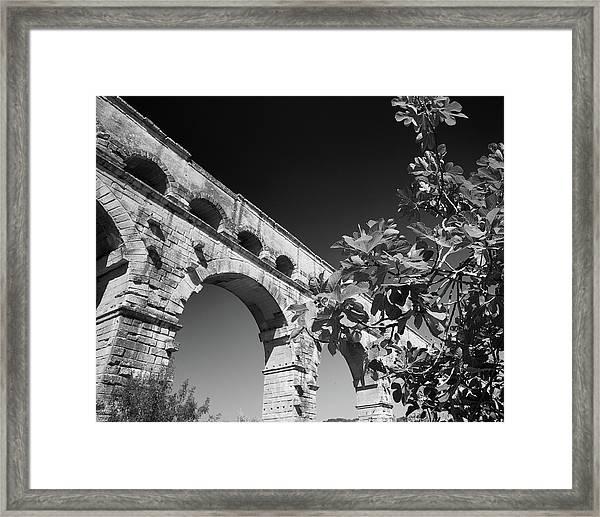 Pont Du Gard And Fig Tree Framed Print