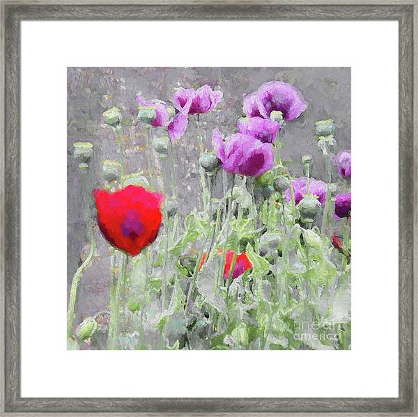 Poppies, 2018 Framed Print