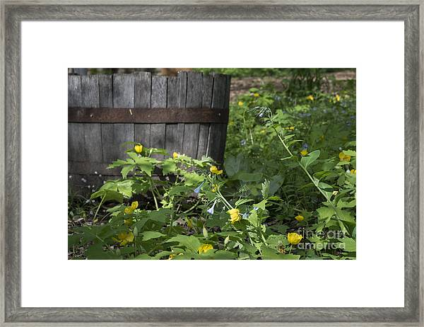 Poppies And Bluebells Framed Print