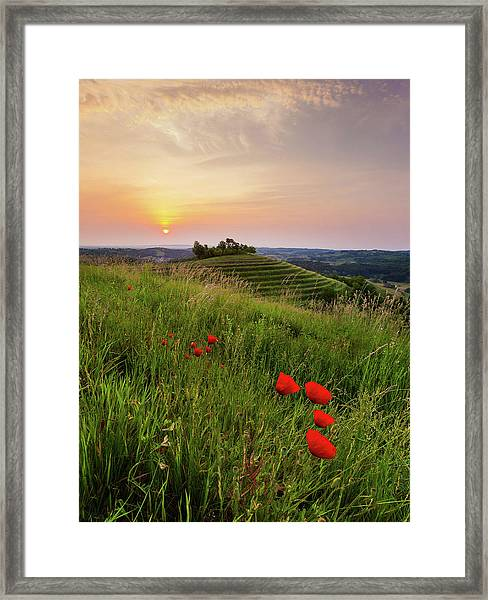 Poppies Burns Framed Print