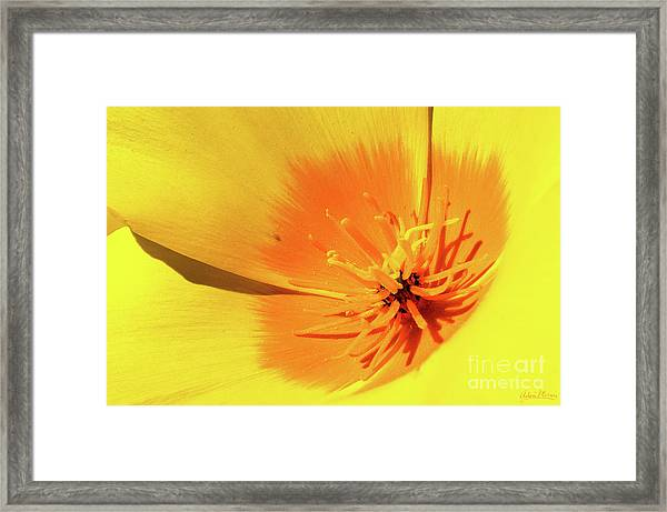 Poppy Impact Framed Print