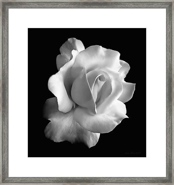 Porcelain Rose Flower Black And White Framed Print