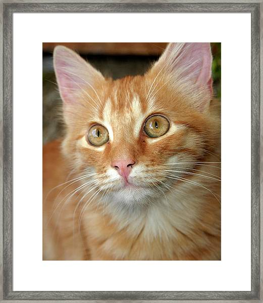 Portrait Of A Cat Framed Print