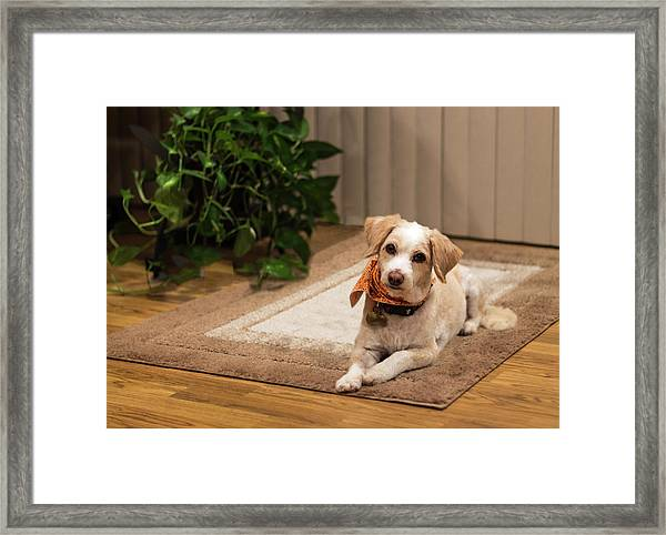 Portrait Of A Dog Framed Print