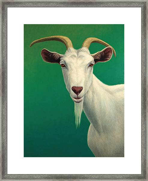 Framed Print featuring the painting Portrait Of A Goat by James W Johnson