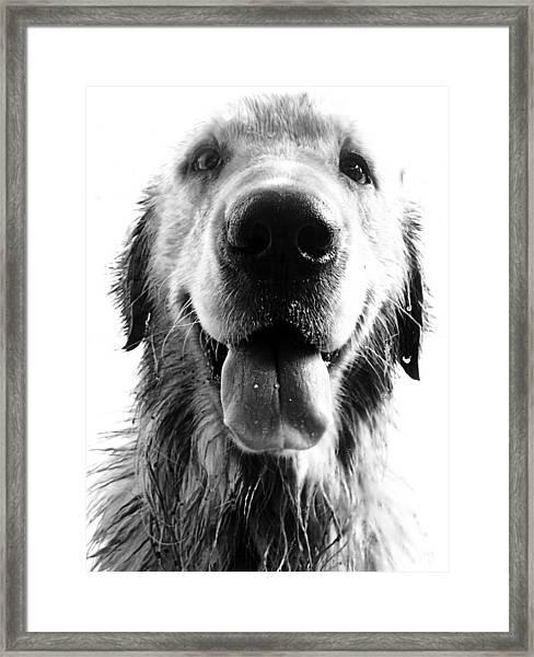 Portrait Of A Happy Dog Framed Print