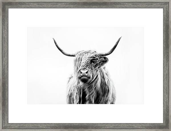 Portrait Of A Highland Cow Framed Print