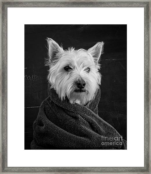 Framed Print featuring the photograph Portrait Of A Westie Dog by Edward Fielding