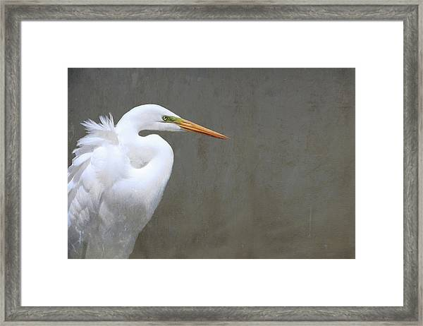 Portrait Of An Egret Rectangle Framed Print