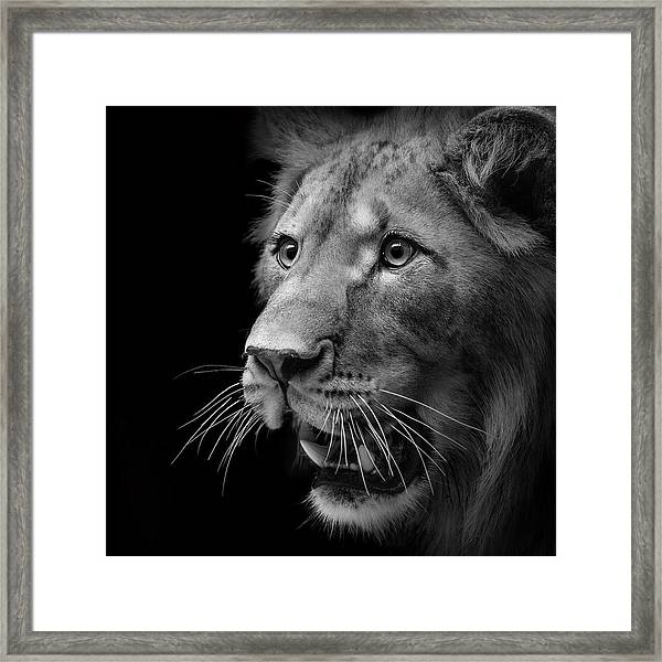 Portrait Of Lion In Black And White II Framed Print