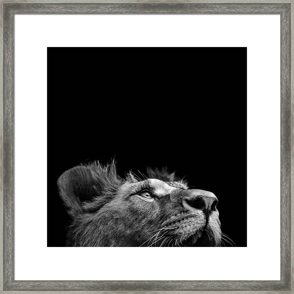 Portrait Of Lion In Black And White IIi Framed Print