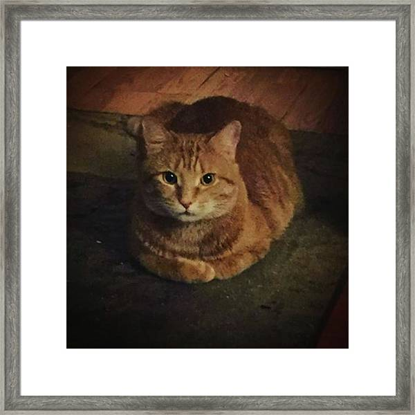 Portrait Of The Artist 🎨 As A Framed Print by Gina Callaghan