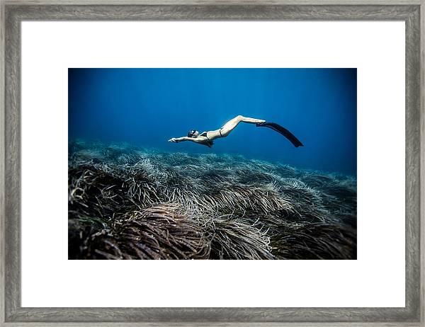 Posidonia Dreams Framed Print by One ocean One breath