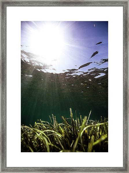 Posidonia Framed Print