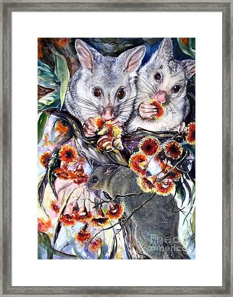 Possum Family Framed Print