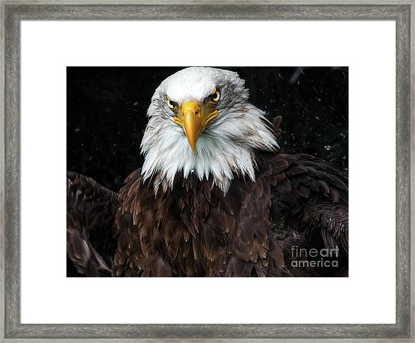 Power Of The Eagle Framed Print