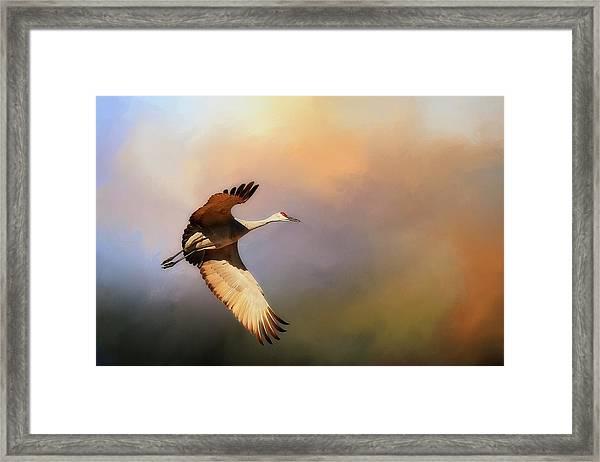 Power Stroke, Sandhill Crane, Bosque Del Apache, New Mexico Framed Print