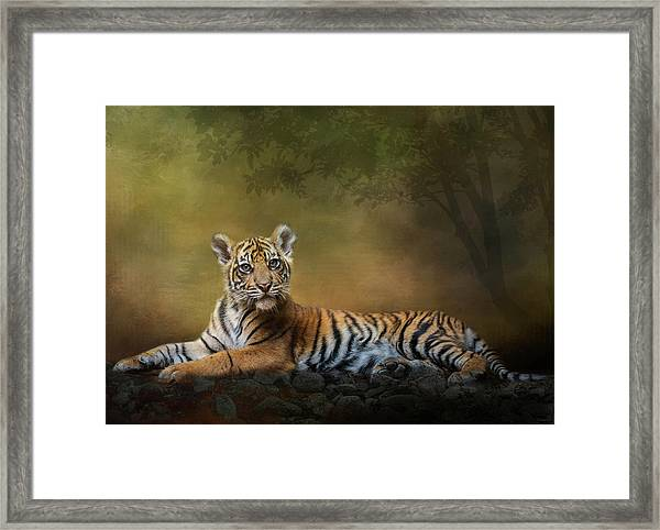 Practicing My Big Kitty Stare Framed Print