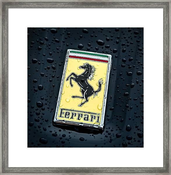 Prancing Stallion Framed Print