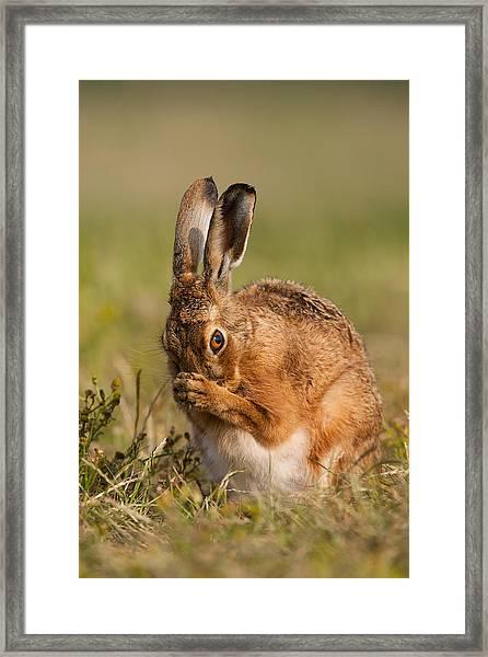 Praying Hare Framed Print