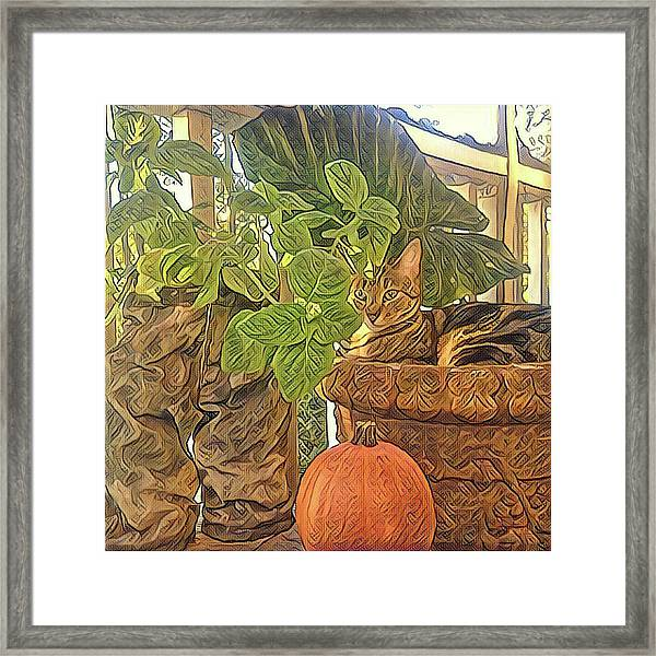 Precious Pumpkin Framed Print