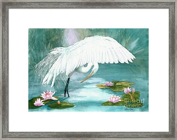 Preening Egret Framed Print by Pauline Ross