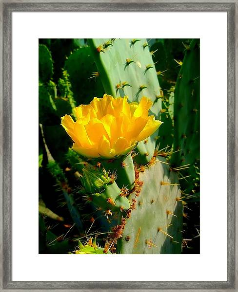 Pretty But Do Not Touch  Framed Print
