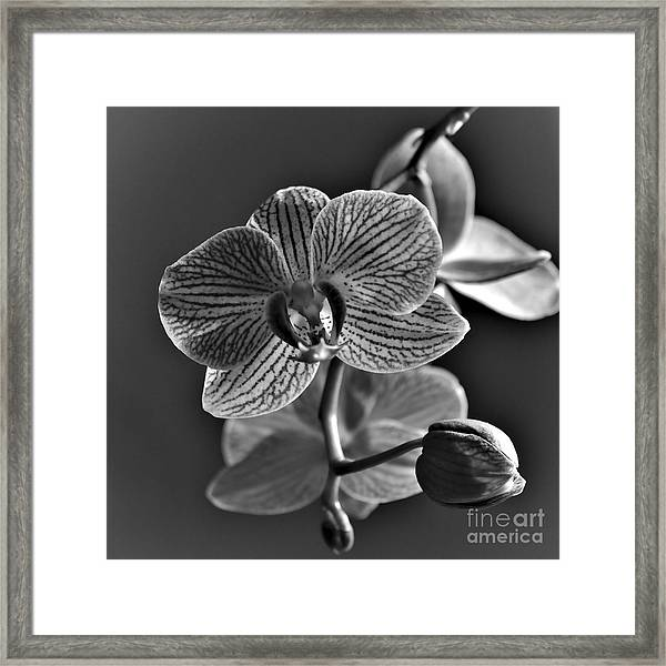 Framed Print featuring the photograph Pretty Orchid Bw by Jeremy Hayden