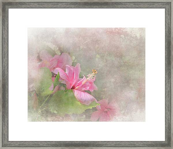 Pretty Pink Hibiscus Framed Print