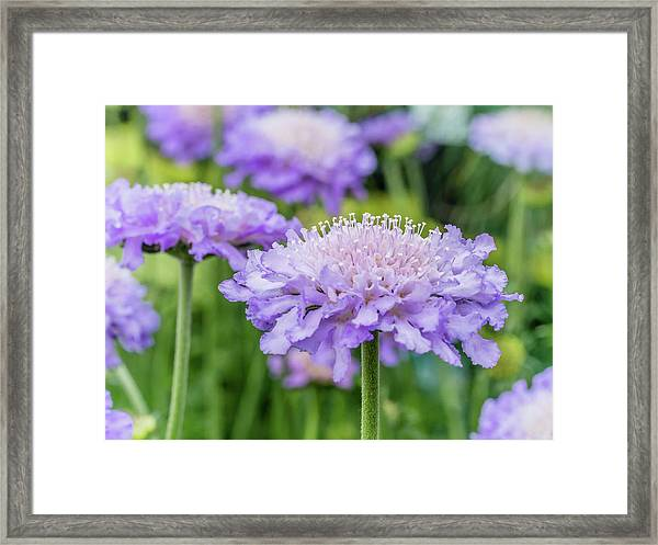 Framed Print featuring the photograph Pretty Purple by Nick Bywater