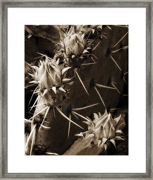 Prickly Pear Buds Framed Print