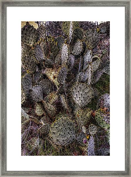 Prickly Pear Cactus At Tonto National Monument Framed Print