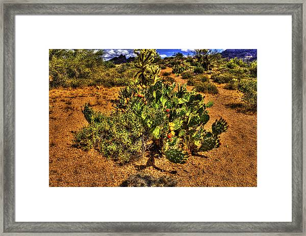 Prickly Pear In Bloom With Brittlebush And Cholla For Company Framed Print