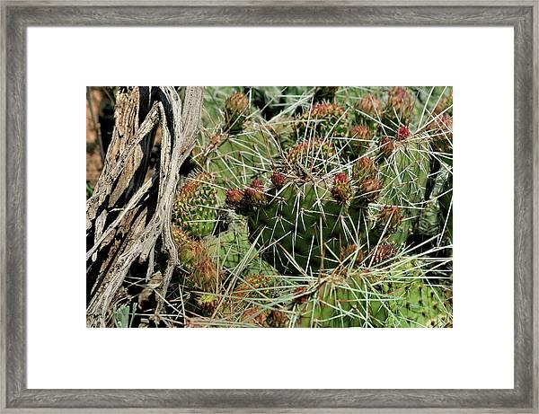 Prickly Pear Revival Framed Print