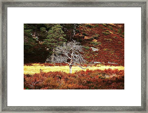 Framed Print featuring the photograph Pride by HweeYen Ong