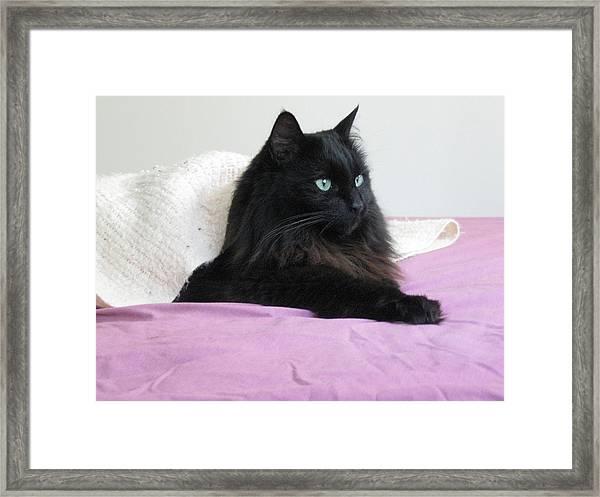 Princessy Cat Framed Print