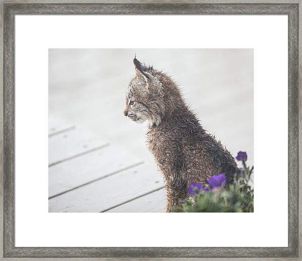 Profile In Kitten Framed Print