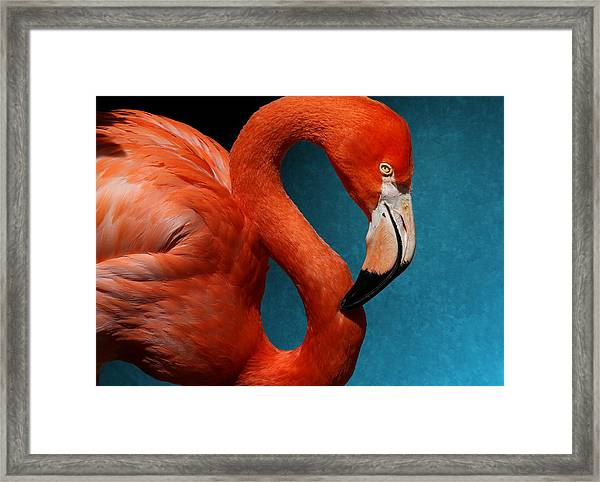 Profile Of An American Flamingo Framed Print