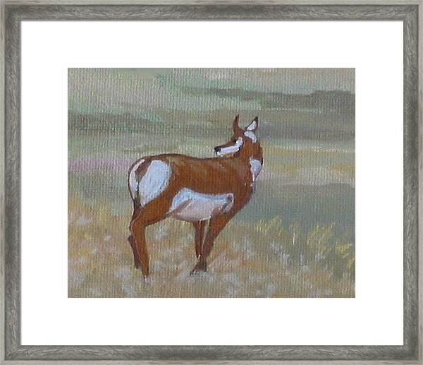 Prong Horned Antelope Framed Print