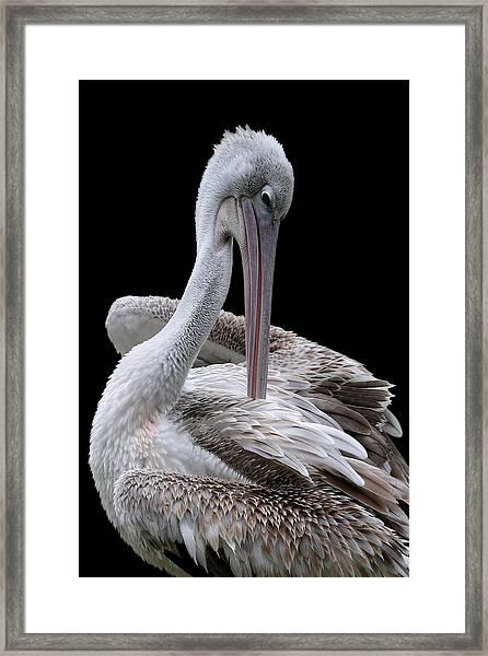 Prospecting - Pelican Framed Print