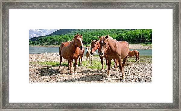 Protecting The Foal Framed Print