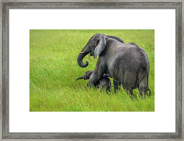 Protective Elephant Mom Framed Print