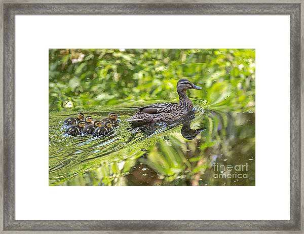Proud Mama Framed Print