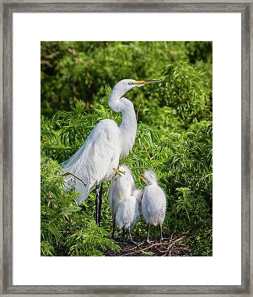 Proud Momma Framed Print