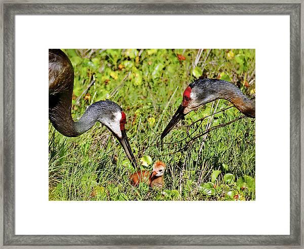 Proud Parents Framed Print