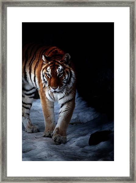 Prowling Out Of The Shadows Framed Print