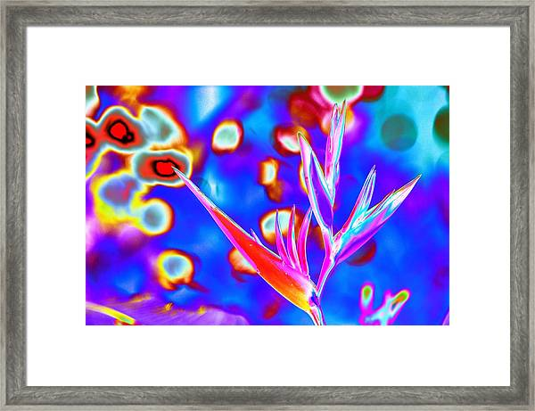 Psychedelic Bird Of Paradise With Bokeh Framed Print